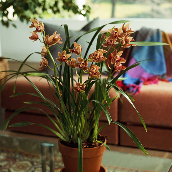 10 easy to grow orchids xenia nova How do you care for orchids after they bloom
