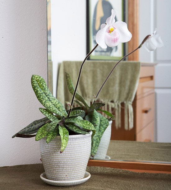 Image result for Ladies' Slipper Orchid indoor